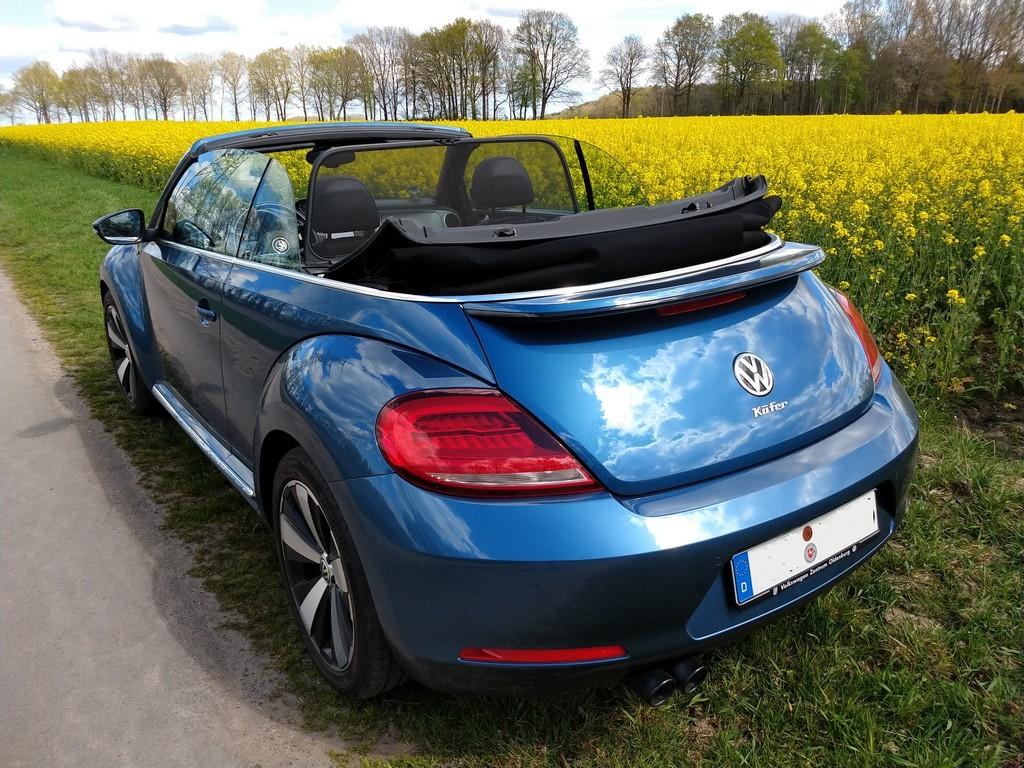VW Beetle Cabrio offen vor einem Rapsfeld